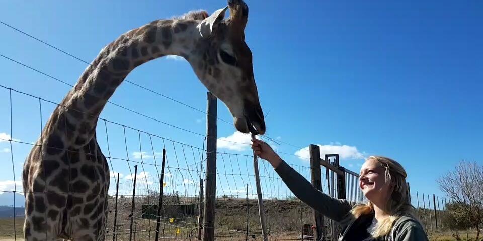 Freiwilligendienst Tierschutz