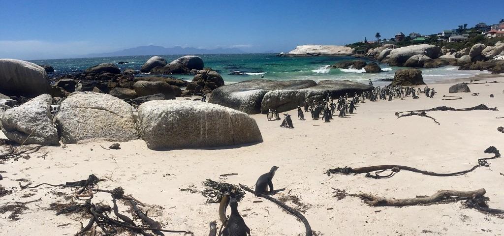 Freiwilligenarbeit Kapstadt Pinguinschutz