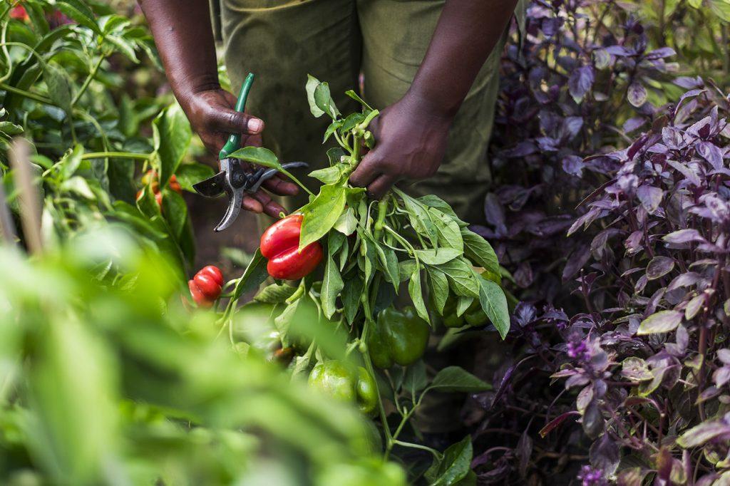 Freiwilligenarbeit Ökologische Landwirtschaft