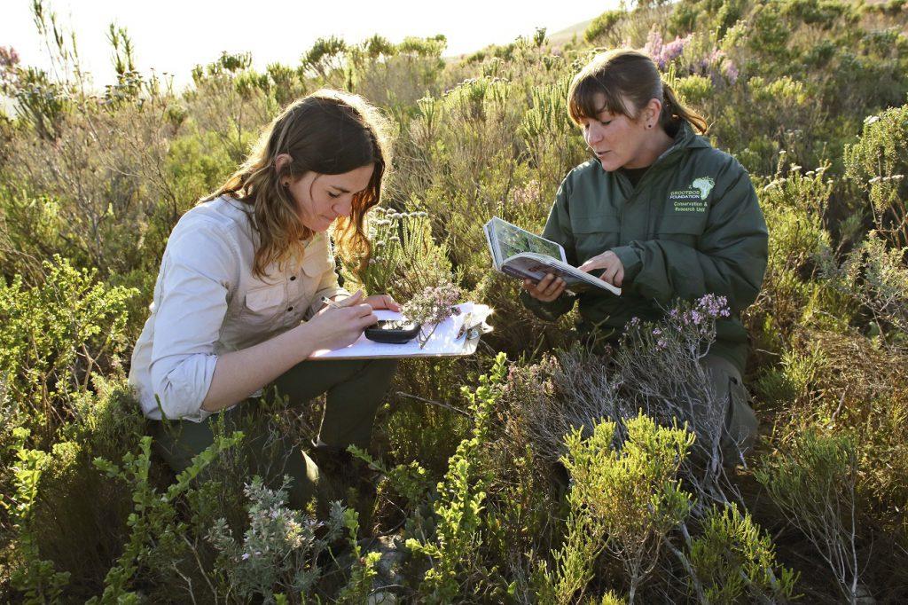Freiwilligenarbeit Ökologische Landwirtschaft Südafrika