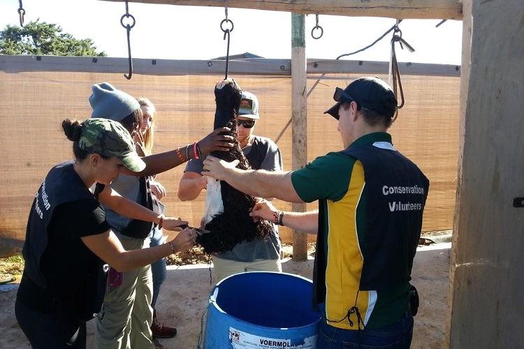 Freiwilligenarbeit Big 5 Schutz Südafrika