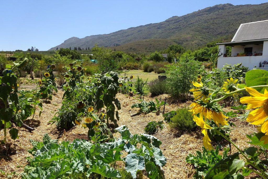 Freiwilligenarbeit Nachhaltige Entwicklung Südafrika
