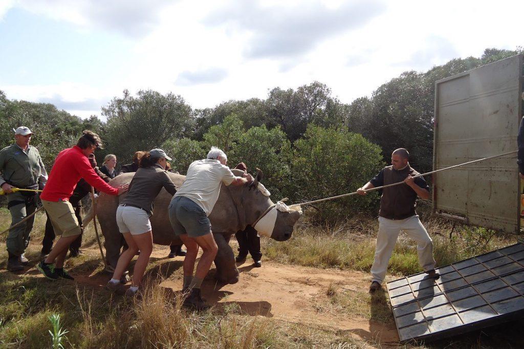 Freiwilligenarbeit Wildlife Südafrika