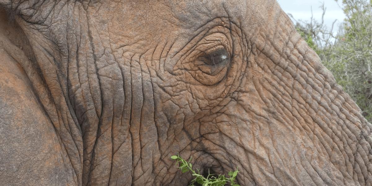Elefantenschutz Südafrika