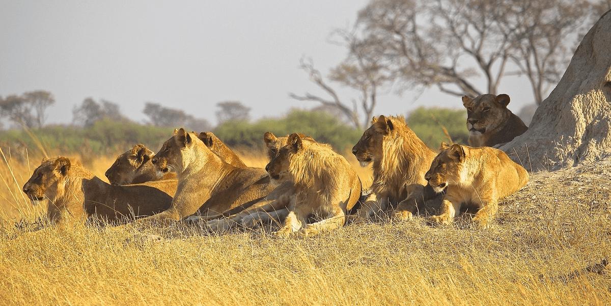 löwenschutz südafrika