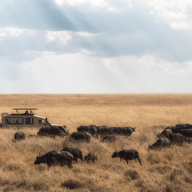 loewenschutz suedafrika